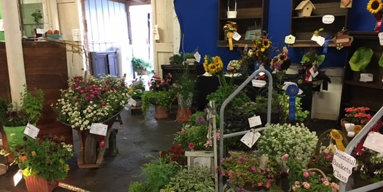 Entries at the Flower Show
