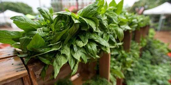 Basil and many other organic leafy greens are for sale by the Bigg Riggs Farm at Old Town Farmers' Market, in Alexandria, VA, on Saturday, Jun. 27, 2015.