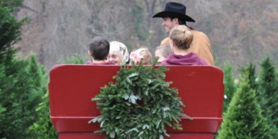 Christmas tree, sleigh ride, pick your own