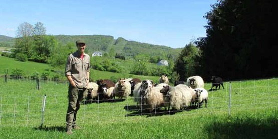 Rick Ryan with sheep at Underhill Farm in Dryden, NY