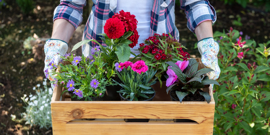 flowers in a crate ready for planting