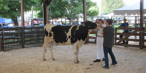 the judge asks questions of a 4-H member during 4-H Dairy Showmanship