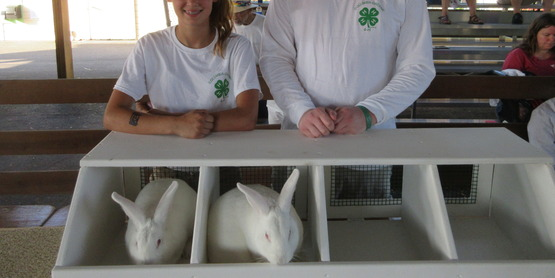two white rabbits ready for the show