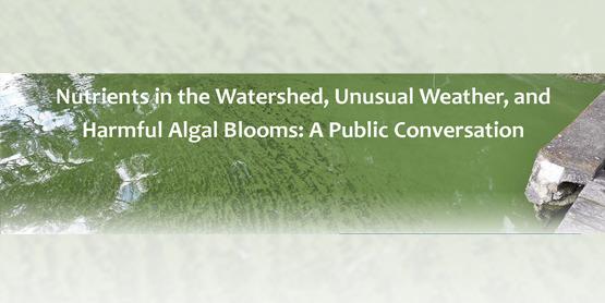 algal blooms