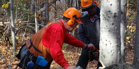 Game of Logging II