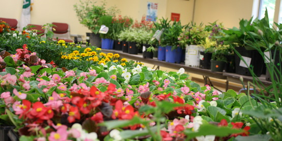 CCESC Annual Plant Sale 2015 Table