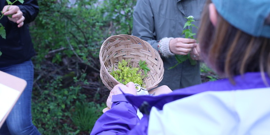 foraging class