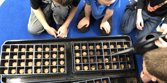 First graders prepare soil pods to plant in their grow cart.