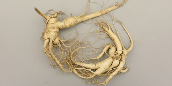 Cultivated Ginseng