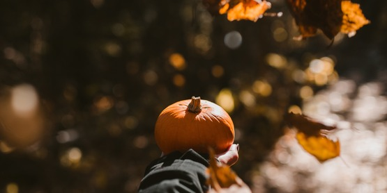 Photo of Person Holding a Pumpkin