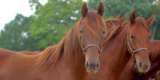 Horses at Willowbrook Farm; horse