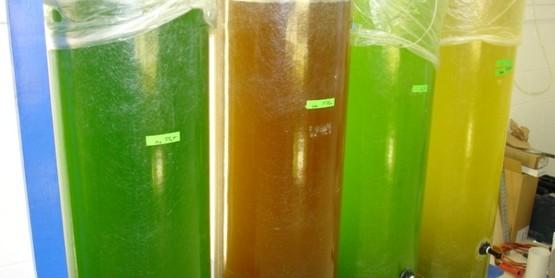 spat algae cylinders (1)