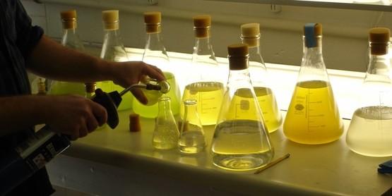 spat algae cultures (1)