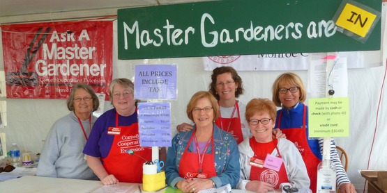 Master Gardeners gear up for the opening day of the Lilac Festival Plant Sale
