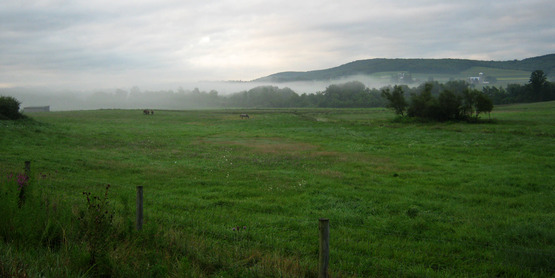 Horse pasture at dawn in Dryden, NY