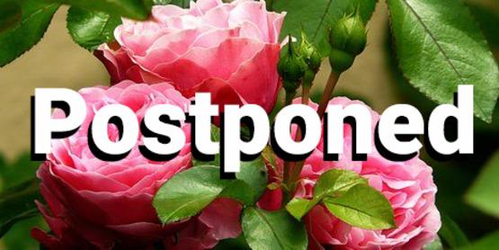 roses-279583__340 Postponed