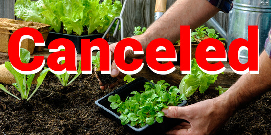 Starting a vegetable Gardening Canceled