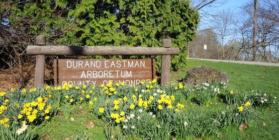 Durand Eastman Park Arboretum