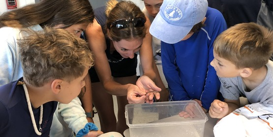 tiana bayside group observing pipefish