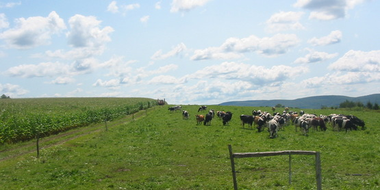 Pasture at Lew-Lin Farm, Dryden NY
