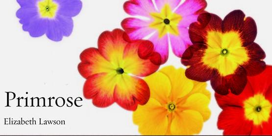 Primrose by Elizabeth Lawson book cover