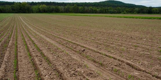 Emerging grains HV Farm Hub 2016