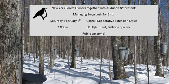 NYFOA Meeting Managing SUgarbush for Birds