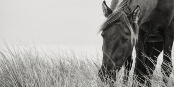 Horse grazing in long grass.