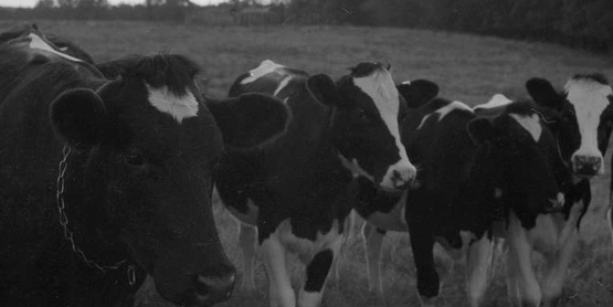 Dairy Day provides an opportunity for dairy farmers to get together, have some social time with their neighbors, and hear updates on what is going on with Cooperative extension and the US and NY Dairy Industry.