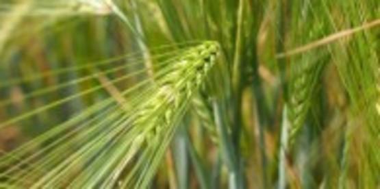 Soybean & Small Grains