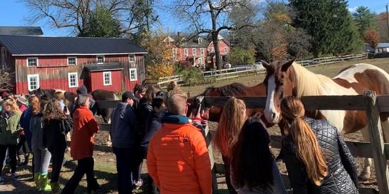 Bergen County Horse Rescue