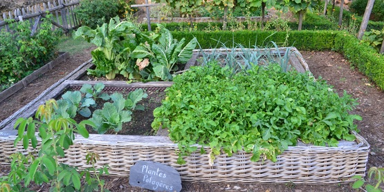 vegetable garden leeks chard cabbage greens wattle fence boxwood grapes potager