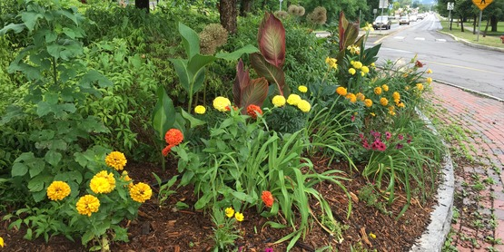 A mixed planting of annuals, perennials and grasses blooms all summer long.