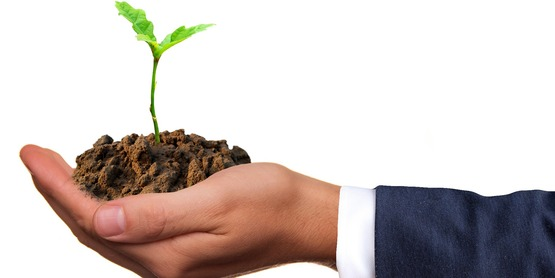 Business hand with plant stock photo