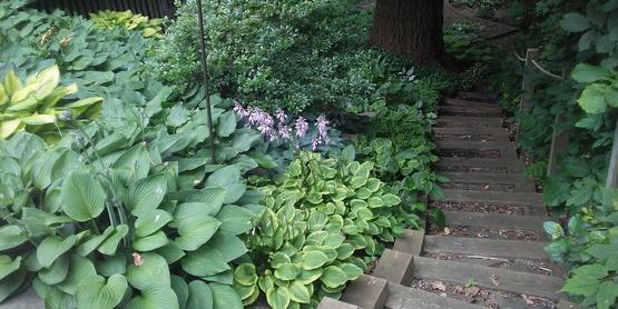 Cindy Lion's garden