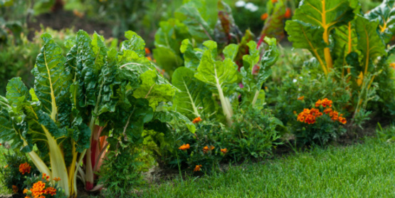 vegetable and flower garden mixed