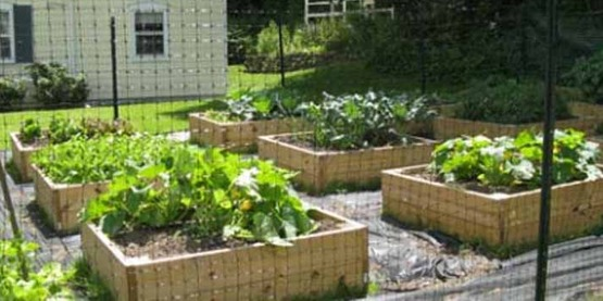"Vegetable ""Victory Garden"" at Cornell Cooperative Extension, Cooperstown (2009)"