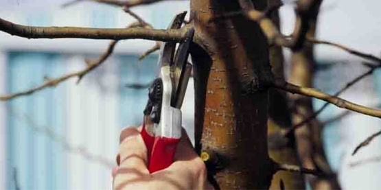 correct use of pruning shears