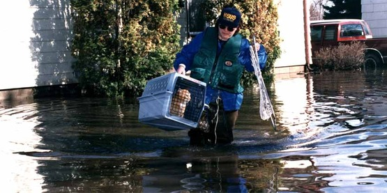 East Grand Forks, MN, 04/01/1997 -- Humane Society of the United States volunteers wade through flood waters to rescue stranded pets.