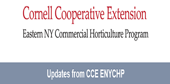 ENYCHP Updates