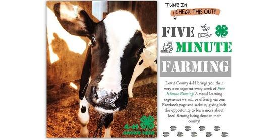 five minute farming