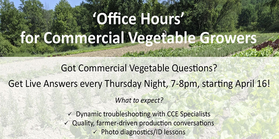 Office Hours for Commercial Vegetable Growers Thursday Nights from 7-8 Zoom Link on the page if you click read more