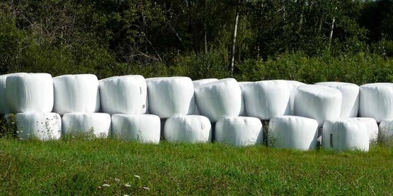 Round bales covered in agricultural plastic; Cornell Recycling Ag Plastics Project (RAPP)