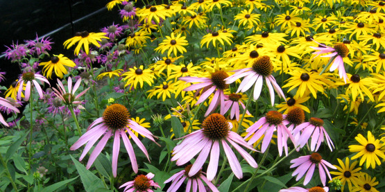 Learn some easy tips for designing an attractive flower garden.