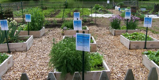 Cutler Vegetable Garden