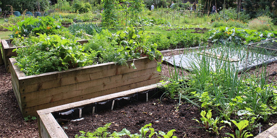 Raised bed organic vegetable garden, photo by local food initiative