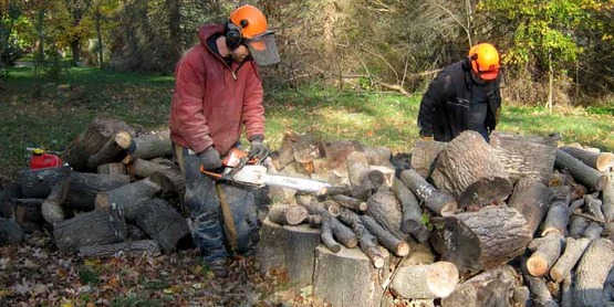 Two men cutting firewood with chainsaws, wearing protective pants, hard hats and ear protection.