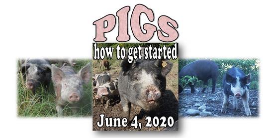 pig flyer