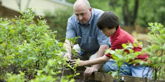 man and boy gardening in raised beds