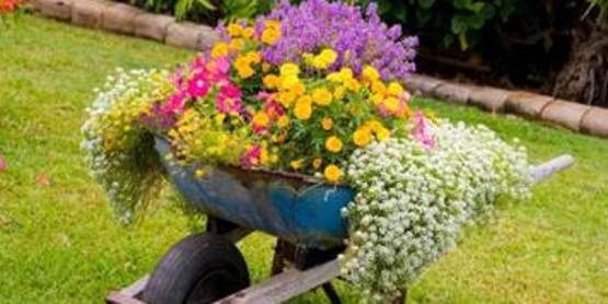 Gardening in containers can make a big impact on your landscape!
